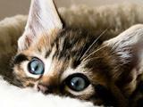 Пазл Котёнок