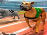 Симулятор: Собачьи Бега 3Д