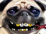 Мопс: Проблемы с Зубами