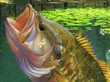 Рыбалка на Озере Зеленая Лагуна