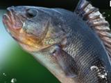 Рыбалка на Зелёном Озере