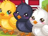 Пасхальные Цыплята: Уход