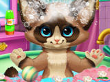/flash/all/koshki/687.jpg