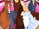 Ухаживать за Лошадьми