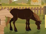 Ветеринар на Лошади