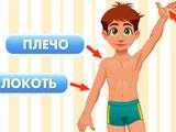 Развивающая: Тело Человека